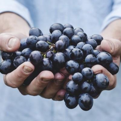 Bear Fruit image